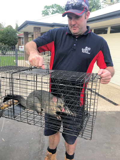 Possum Removal Cost
